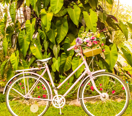 Bicycle decoration with flowerin the garden   photo