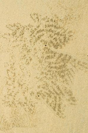 Crab hole on the beach . photo