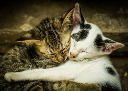 Cats hug friend while sleeping