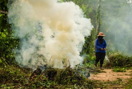 Gardener burn the trees garbage. photo