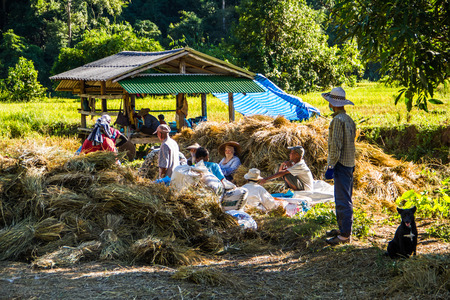thresh: MAE HONG SON, THAILAND-NOVEMBER 12: The farmers take a rest from harvesting rice  on November 12, 2014 in Mae Hong Son, Thailand. This harvesting is original style .