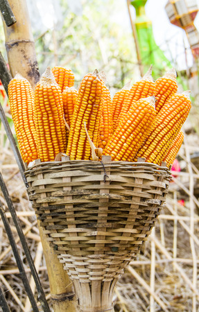 Dry corn in bamboo basket. photo