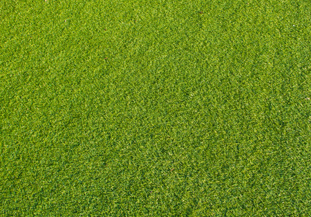Green turf close up background.