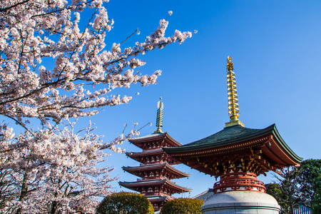 Japanese pagodo with cherry blossom view. Editorial