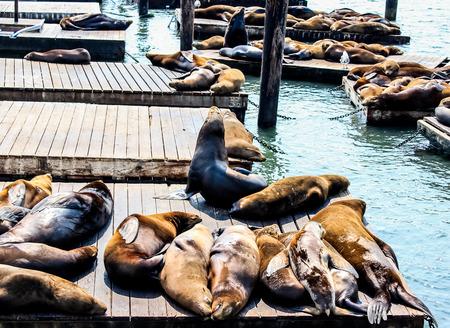 soak: Sea lions soak up the sun .