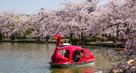hanami: TOKYO,JAPAN-APRIL 2: People  join the swan boat in  Hanami festival at Ueno park  Tokyo,Japan on April 2,2015.Hanami festival will start when cherry blossom full bloom.