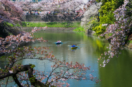 6 people: TOKYO,JAPAN-APRIL 6: People  join the  boat in the river of Kitanomaru national  park  Tokyo,Japan on April 6,2015.Kitanomaru park is favorite sakura view point. Editorial