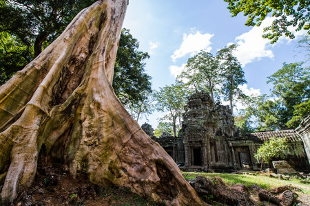 ta: Giant tree in Ta Prohm temple . Stock Photo