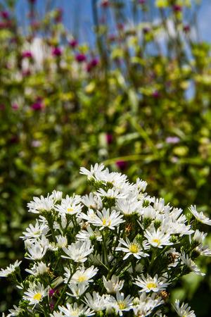 leaf cutter: white cutter flower in the field.