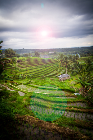 ubud: Jatiluwih rice fields on Bali island, Indonesia