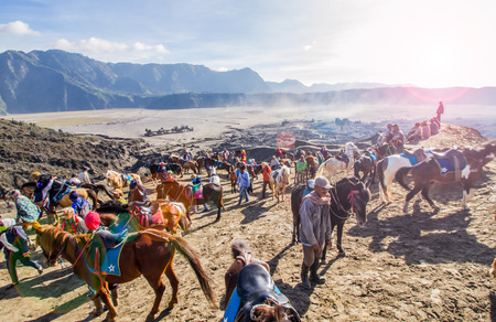 EAST JAVA, INDONESIA - AUGUST 25: The horses available for service tourist  at Mount Bromo volcano on August 25,2016 in East Java, Indonesia. Editorial