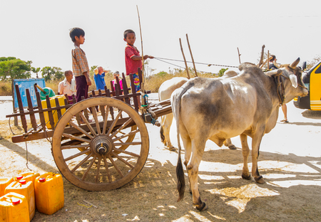 BAGAN,MYANMAR-MARCH 10:The boy stand by to control ox cart  in Bagan,Myanmar on March 10,2017.Ox cart still be use for carriage in Myanmar.
