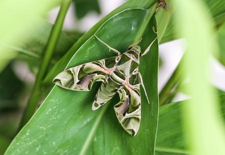 Strange butterfly on green leaf.