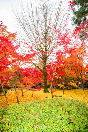 Autumn at Eikando Zenrinji temple,Kyoto. Editorial
