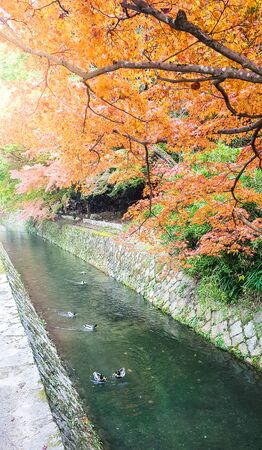 Autumn at Philosopher's path,Kyoto. Archivio Fotografico - 147957945