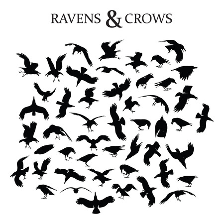 Set of 49 black crows and ravens in different poses and perspectives Illustration