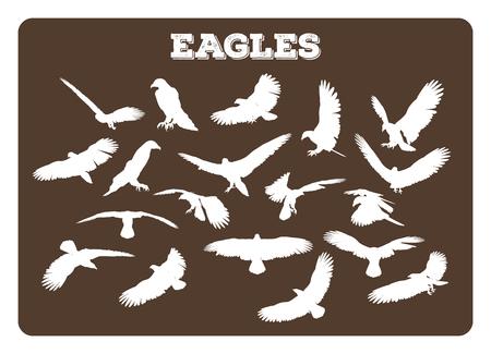 aigle: Jeu de différentes silhouettes d'aigle dans diverses poses de ralenti et de vol