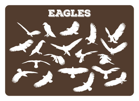 eagle feather: Set of different eagle silhouettes in various idle and flying poses