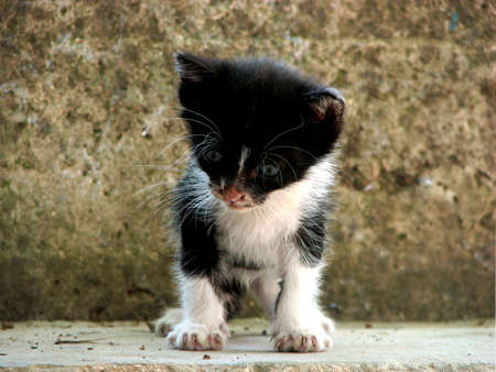 down the stairs: Small kitten trying to climb down stairs, staring frightened at the drop in front of it Foto de archivo