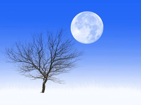 Bare tree in a frosted grass field, with full moon above photo