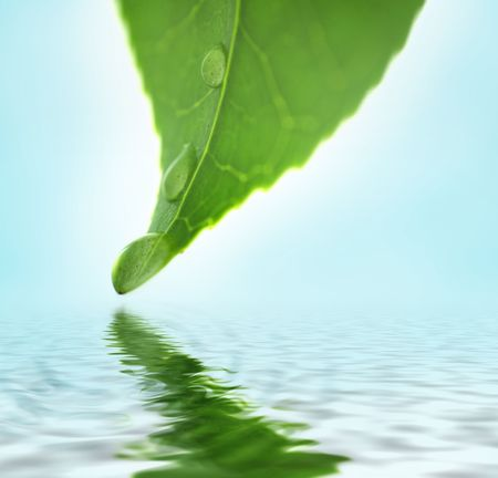 Green leaf with water drops reflected in rippling water