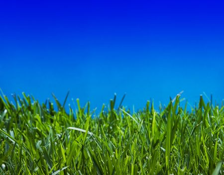 Brilliant emerald grass with beautiful cloudless summer sky - close-up photo
