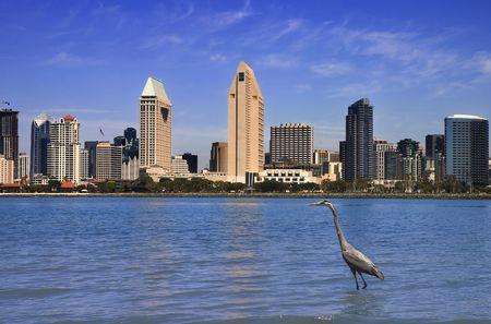 great blue heron: Great Blue Heron In Front Of San Diego Skyline