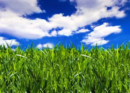 Brilliant emerald grass with beautiful cloudy summer sky - close-up photo