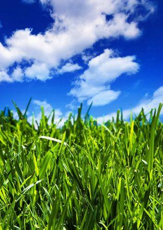 Brilliant emerald grass with beautiful cloudy summer sky - close-up, vertical arrangement Stock Photo - 2406875