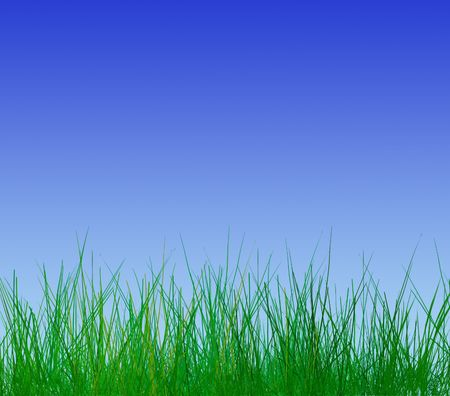 grass blades: Close-up of young grass blades on cloudless blue sky
