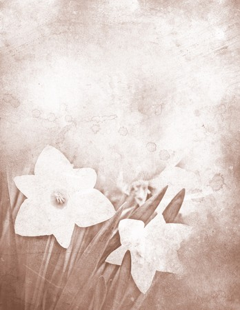 Grungy stationery with white daffodils 免版税图像
