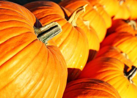 Rows of big pumpkins at the country fair