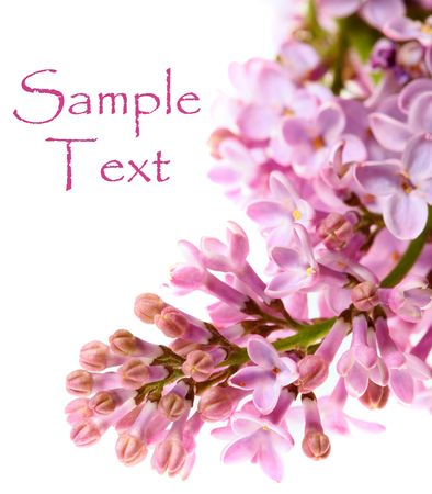 Fresh branch of lilac flowers, with copyspace and shallow depth of field Stock Photo