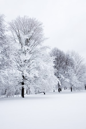 Snow covered trees after a storm photo