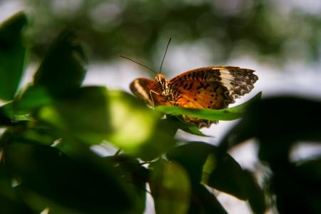 butterfly garden: Monarch butterfly inside Butterfly Garden in Changi International Airport  Stock Photo