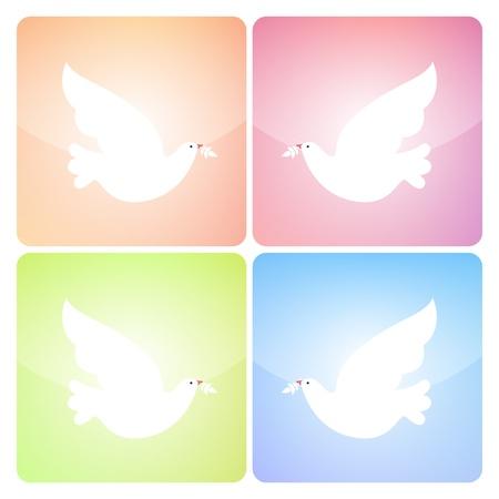 paloma caricatura: Cuatro iconos cuadrados paloma de la paz en cuatro colores