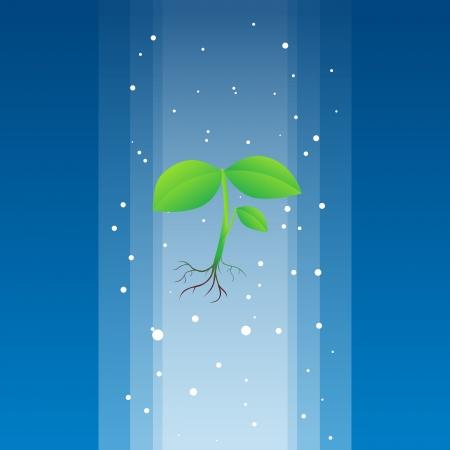 reforestaci�n: Planta celestial que desciende de arriba para sanar la tierra.