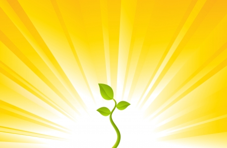 yellow background: One young plant on a shining yellow background  Illustration