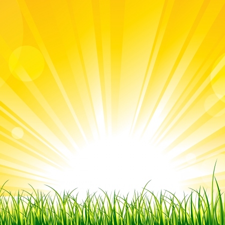 Vector illustration of grass on the sunshine rays. Vector