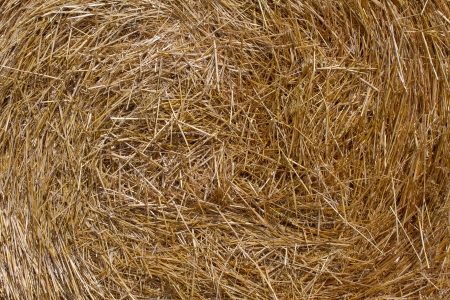 yellow straw in bale background photo