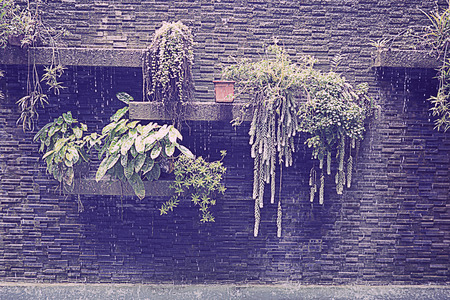 runoff: Vintage brick wall with layer of green plant and waterfall