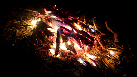 oxidation: Camp fire at night in the forest Stock Photo