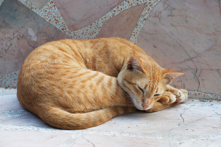 frisky: Yellow cute cat sleeping on marble chair Stock Photo