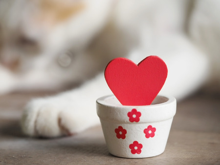 valentine cat: Valentines day background with red hearts and white cat in background, Love and Valentine concept.