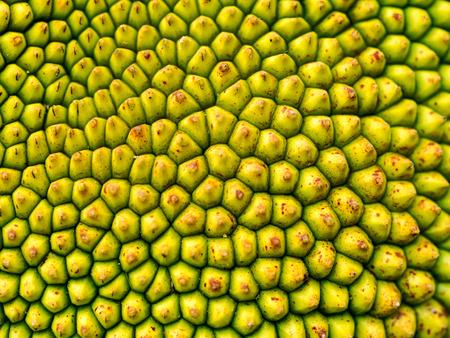 consecutive: Closeup macro of jackfruit peel texture a small button consecutive yellowish green of young jackfruit, Tropical fruit.