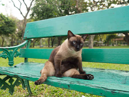 moggy: Cute fat roan cat lying on green chair in park.