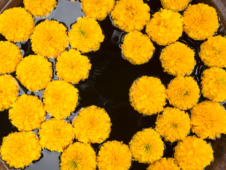 Beautiful yellow marigold flower floating on water. Stok Fotoğraf