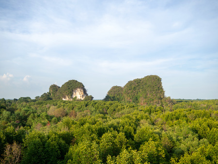 Green mountain hill in mangrove forest in nature with clear sky day.