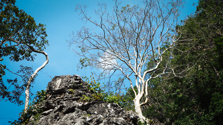 Less leaf tree and green leaf tree on rock mountain against with blue sky. Nature, different and change concept.