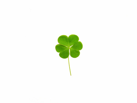 Green clover leaf isolated on white background. Saint Patricks Day.